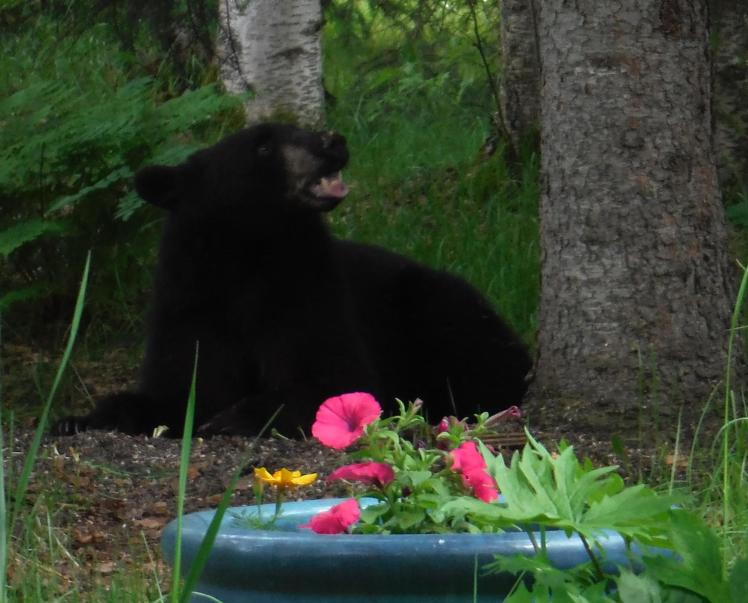 Bear-Flowers